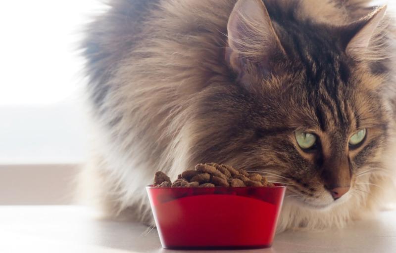 猫がねこはぐを食べないときの原因と対処法