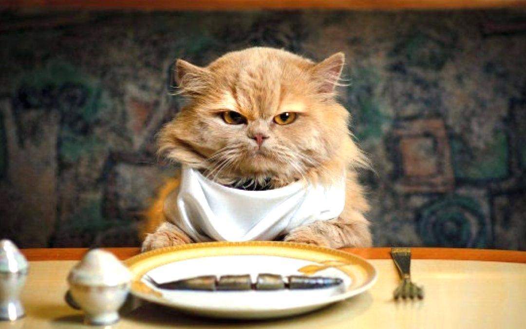 猫がドライフードを食べないとき