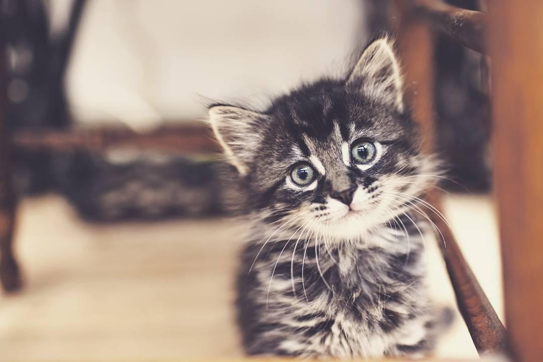 幼猫・子猫のキャットフード