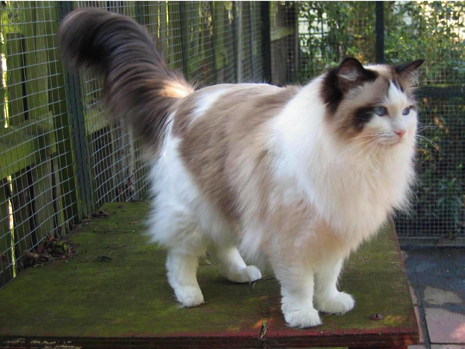 成猫期の猫の体について