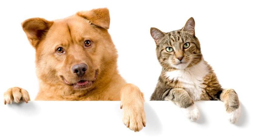 猫と犬の体の違い
