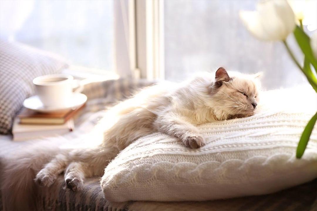 完全室内飼いの猫のキャットフードの選び方