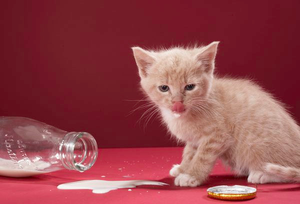 生まれてから子猫用のフードを食べるまで