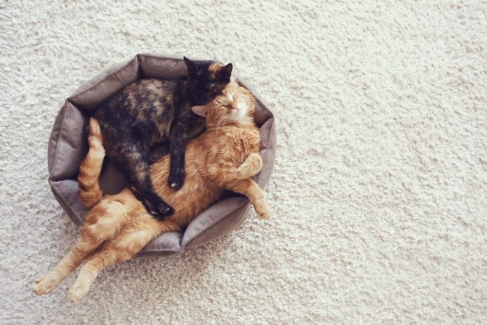 避妊・去勢をした猫のキャットフード