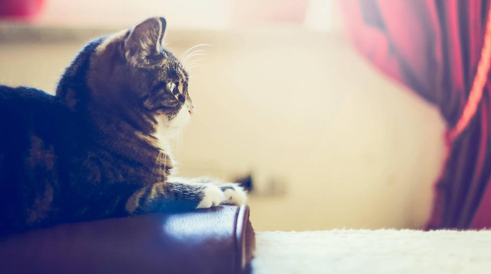 シニア・高齢猫のキャットフード