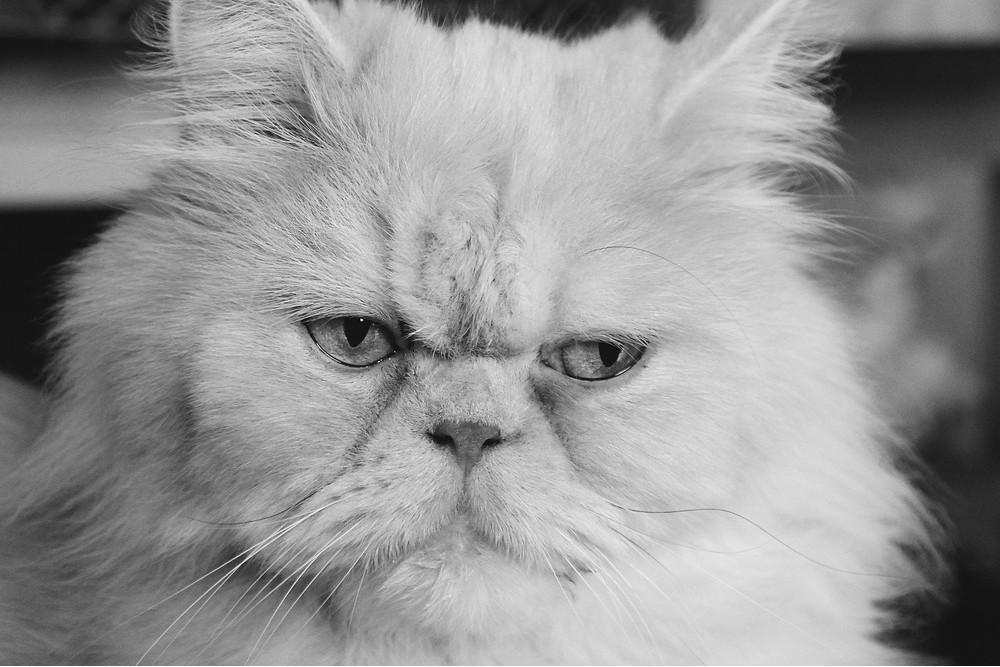 猫はいつからがシニア期