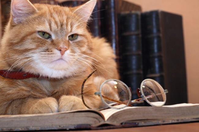 シニア猫のキャットフードの選び方